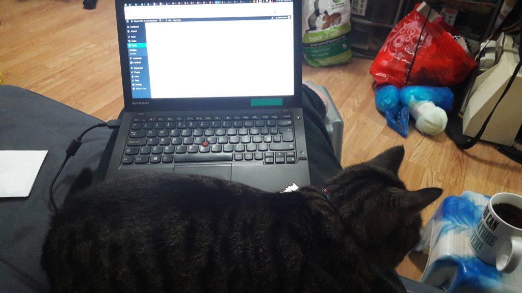 cat from porlock