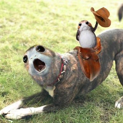 porg cowboy riding porg dog